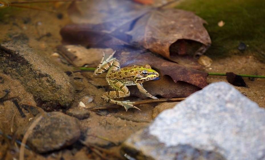 Façam uma visita à Tapada Nacional de Mafra. Este ecossistema único no país ermite observar vários animais em estado selvagem e propõe muitas outras experiências turísticas destinadas à família. Uma sugestão a ter em conta noutros parques naturais do país.