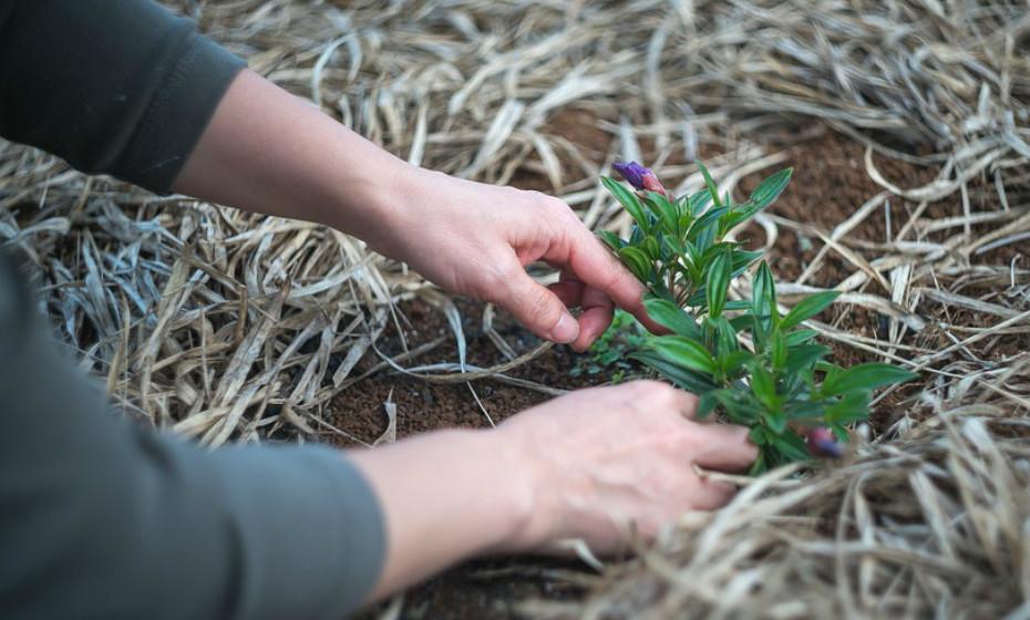 Se estiver a fazer jardinagem, mais uma vez, tome logo de seguida um banho para expulsar o pólen da pele e do cabelo.