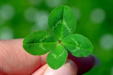 Ter a sorte ou fazer a sorte?
