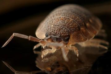 Insetos estão cada vez mais resistentes aos inseticidas