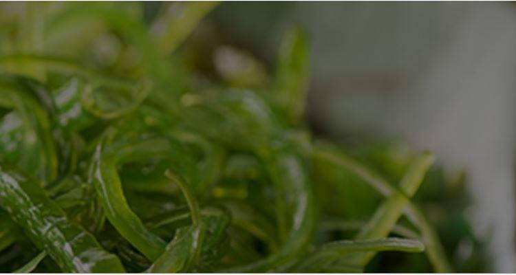 Esparguete de algas, a nova tendência de comida saudável