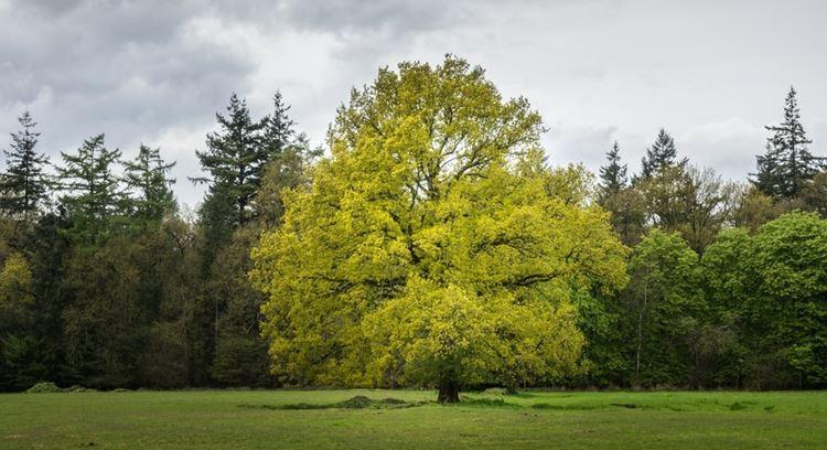 Há 60 mil espécies de árvores no mundo