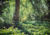 Arrábida, Douro, Serra da Estrela… já conhece os 13 parques naturais portugueses categorizados pelo Instituto da Conservação da Natureza e das Florestas? Fazemos-lhe uma visita guiada de norte a sul do país, para poder escolher um para visitar no próximo fim de semana.