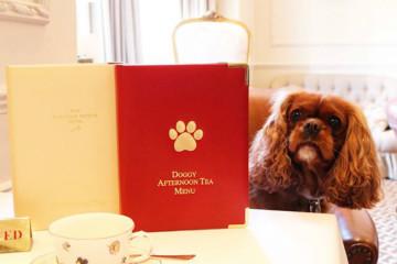 Este hotel londrino sabe como fazer o seu cão abanar a cauda de felicidade. Os canídeos têm direito a comida, guloseimas, água, instalações próprias e muito mais. Tudo num hotel de luxo. Veja as imagens.