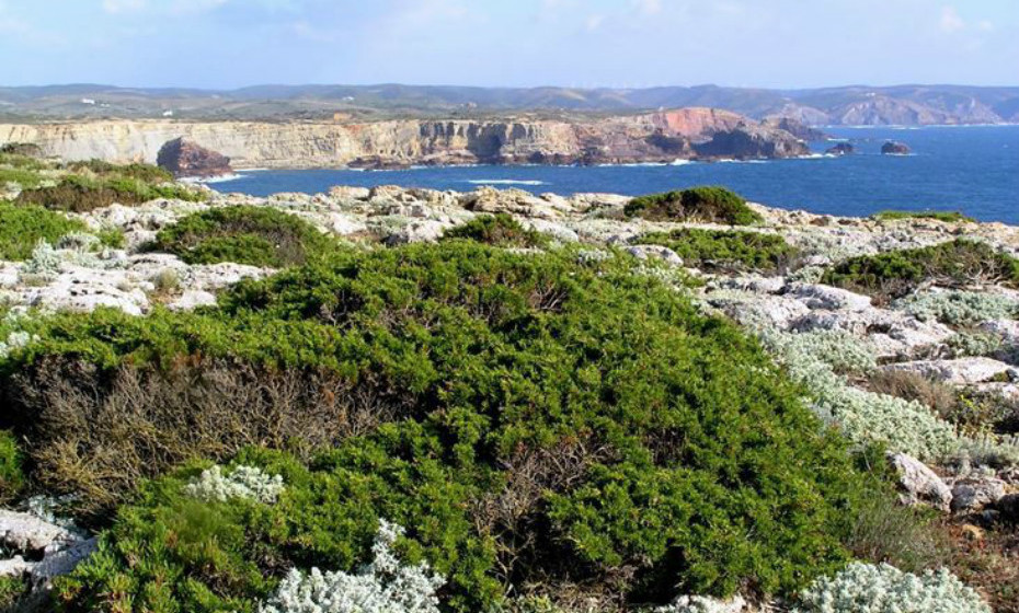 Parque Natural do Sudoeste Alentejano e Costa Vicentina: Localiza-se entre a ribeira da Junqueira, em São Torpes, e a praia de Burgau, com uma extensão de 110 km. O seu clima é mediterrânico, mas com forte influência marítima. A avifauna e ictiofauna têm grande importância neste parque, assim como a flora, com vegetação bastante diversificada.