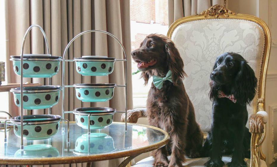Egerton Hotel é um hotel de luxo londrino que lhe dá a possibilidade de degustar um belo lanche com o seu animal de estimação.