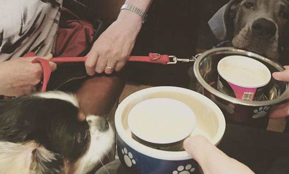 Tome o seu 'chá das 5' com o seu melhor amigo peludo.