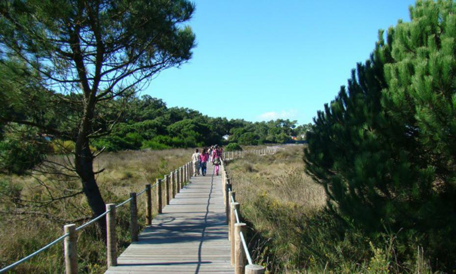Parque Natural do Litoral Norte: entende-se ao longo de 16 km de costa, do litoral norte, entre a foz do rio Neiva e a zona da Apúlia, em área administrada pelo município de Esposende. No Parque Natural do Litoral Norte foram inventariadas 220 espécies de vertebrados, representativas de uma elevada biodiversidade faunística. A nível do património florístico, no Litoral Norte foram inventariadas 240 espécies de plantas, repartidas por 15 habitats.