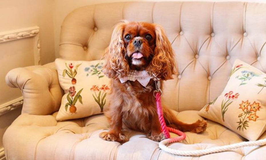 O hotel também fornece aos hóspedes um cuidador de animais pessoal e instalações para o bichinho.