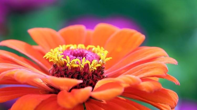 Montijo recebe Festival da Flor de 12 a 21 de maio