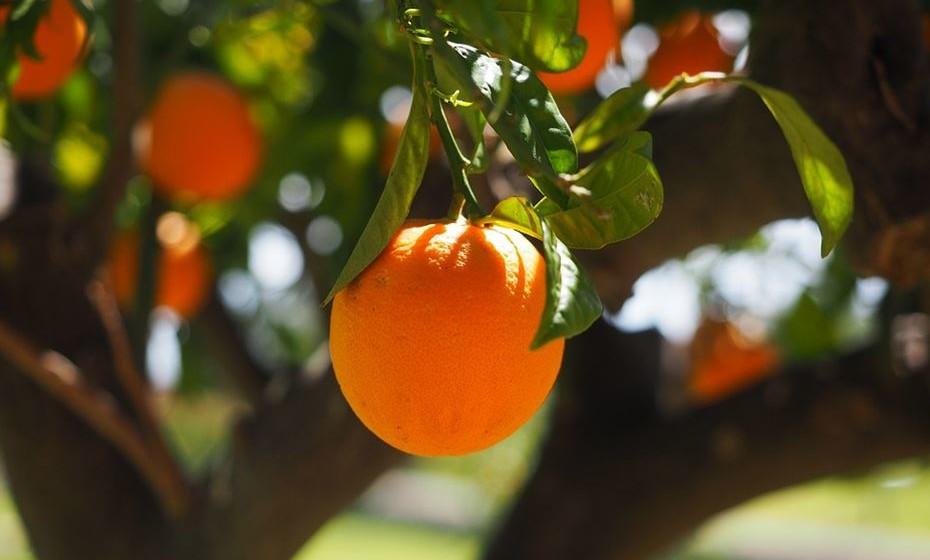 Marque uma atividade no campo, como colher laranjas ou maçãs e pendure a caixa do anel na árvore. Certifique-se de que é ela quem vai apanhar a fruta naquela área.