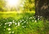 Sentimo-nos bem na natureza e a ela que recorremos quando procuramos tranquilidade. No Dia Mundial do Ambiente, conheça alguns factos curiosos sobre o meio ambiente revelados pela Organização das Nações Unidas. Uma casa heterogénea que todos devemos preservar.