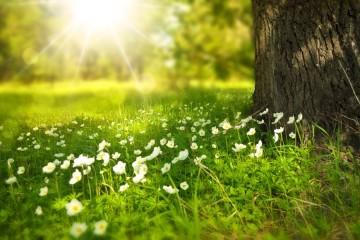 Sentimo-nos bem na natureza e a ela que recorremos quando procuramos tranquilidade. No Dia Internacional da Diversidade Biológica, assinalado a 22 de maio, conheça alguns factos curiosos sobre o meio ambiente revelados pela Organização das Nações Unidas. Uma casa heterogénea que todos devemos preservar.