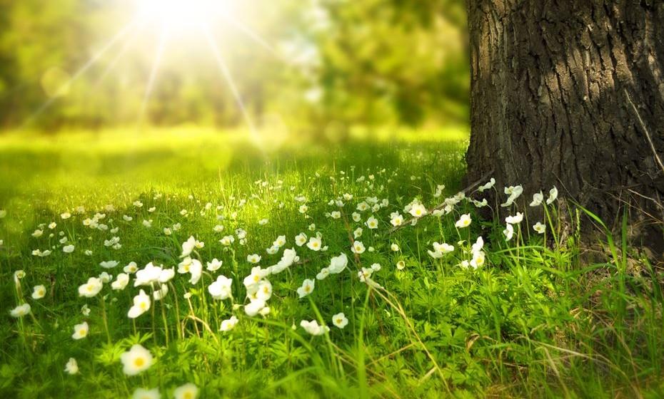 Sentimo-nos bem na natureza e a a ela que recorremos quando procuramos tranquilidade. Na altura em que se assinala o Dia Mundial do Ambiente, a 5 de junho, conheça alguns factos curiosos sobre o meio ambiente revelados pela Organização das Nações Unidas.