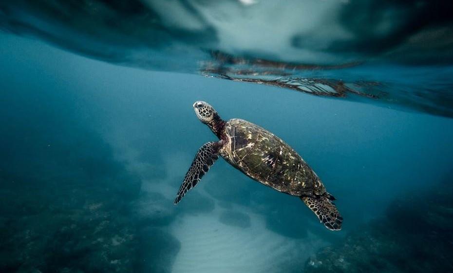 Os oceanos cobrem três quartos da superfície terrestre, contêm 97 por cento da água da Terra e representam 99 por cento do espaço vivo no planeta, em termos de volume.