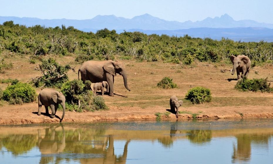 O retorno do investimento em áreas protegidas foi estimado em 100: 1. Por exemplo, melhorar o estado de todas as espécies ameaçadas e cumprir as metas da área protegida de 2020 custaria 70 mil milhões de euros por ano.