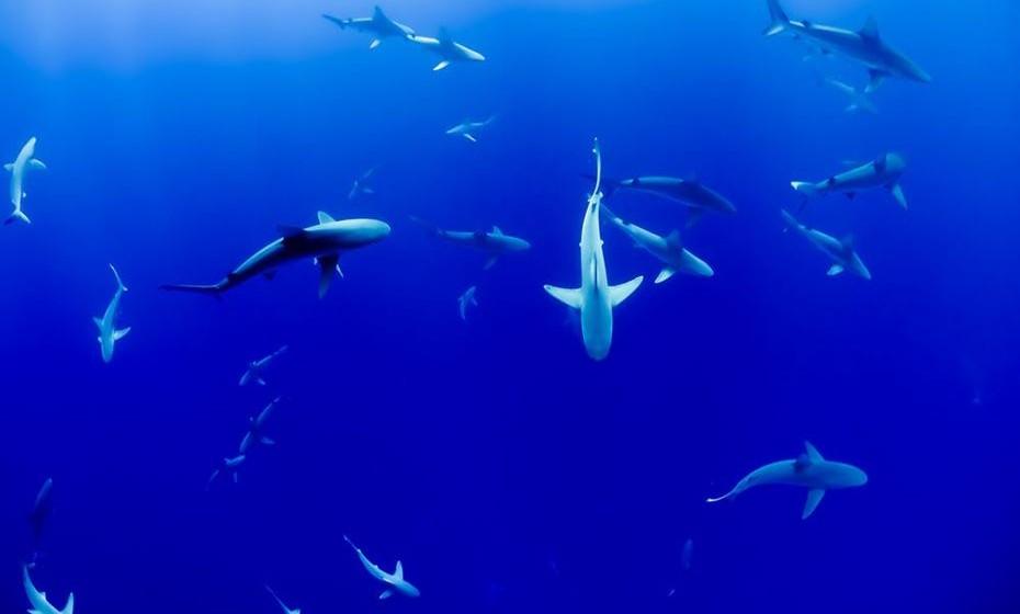 Os oceanos contêm cerca de 200.000 espécies identificadas, mas os números reais podem chegar aos milhões.