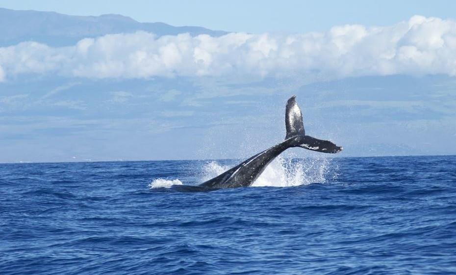 A CNN divulgou um guia dos dez melhores lugares no mundo para avistar estes gigantes dos mares, por tipo de baleia e por época do ano. Se este é um dos seus sonhos, veja de seguida.