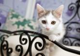 Longcroft Luxury Cat Hotel East Barnet. Fotos: D.R.