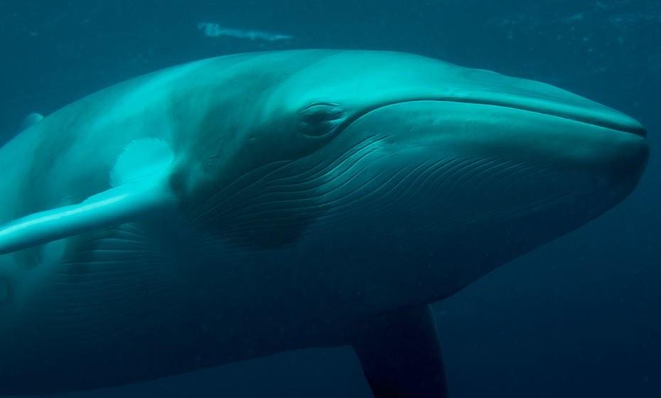 Baleia-de-minke - Antártica. Entre fevereiro e março, estão especialmente amigáveis e interagem com os humanos que as observam. Mas andam porá aquelas águas entre novembro e março.