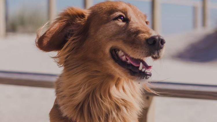 """Evento """"Friends for Life"""" promove adoção de cães"""