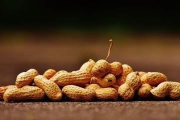 Alergia ao amendoim superada em ensaio clínico na Austrália