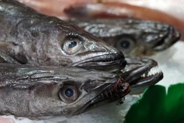 Plataforma portuguesa rastreia pescado desde o mar até ao prato
