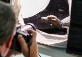 Animais do Jardim Zoológico vão integrar exposição mundial 'Photo Ark'