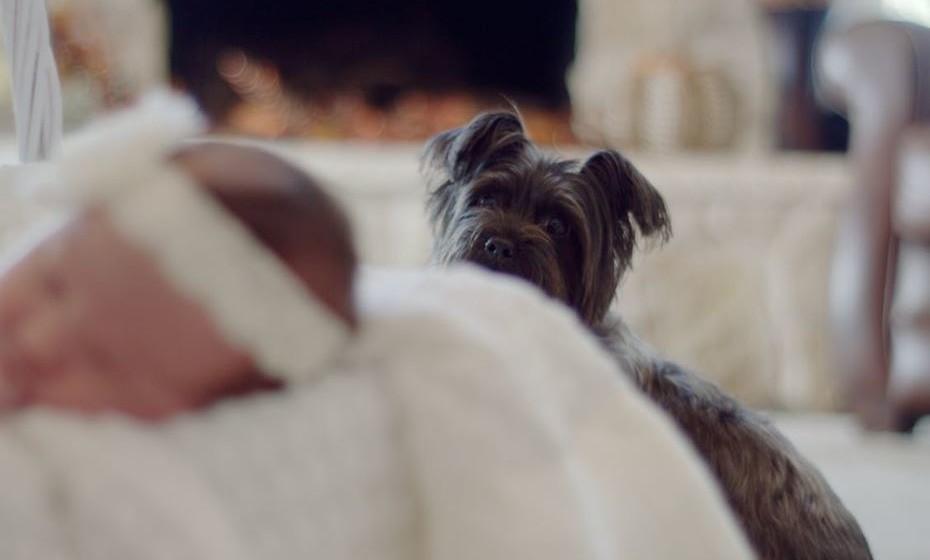 O Colégio Americano das Alergias, Asma e Imunologia dá dicas para pessoas com alergia a cães que têm um cão em casa. Veja de seguida.