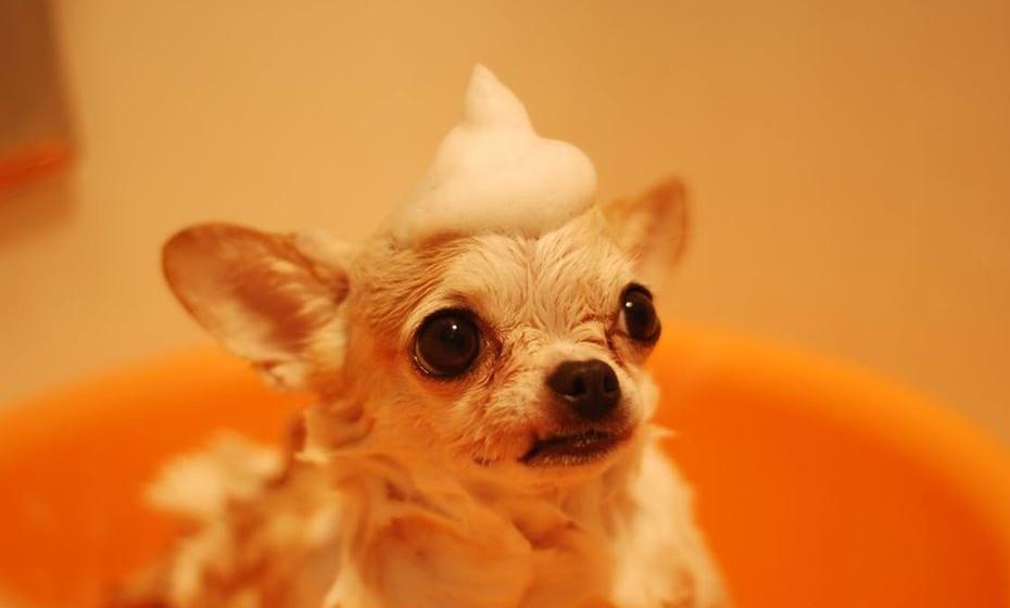 Dar banho ao cão uma vez por semana pode reduzir o alergénio do cão no ar.