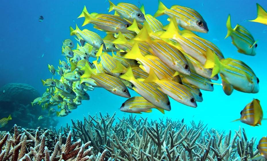 Passemos para debaixo de água. Os mergulhadores e snorklers não podem perder um mergulho na Grande Barreira de Corais, na Austrália. Não só o local tem mais de 400 tipos diferentes de coral e 1.500 espécies de peixes, mas a maravilha natural tem-se deteriorado rapidamente, devido ao aquecimento global, pelo que não deixe para depois.