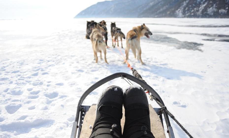 Ainda no mundo da neve, viaje em trenós puxados por cães na Sibéria. Visite lagos gelados e massas de neve a perder de vista apenas acessíveis quando alcançados pela leveza das patas dos Huskys.