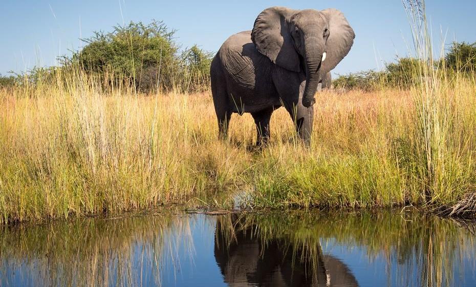 Aventurava-se num safari em canoa pelo Delta do Okavango, no Botswana? A riqueza da fauna e da flora e a sua proximidade às mesmas vão fazer acelerar-lhe o coração, sem dúvida.