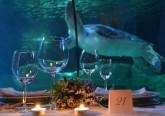 Jantar ao lado de tubarões, raias e tartarugas? Não é nas Caraíbas, é no Porto