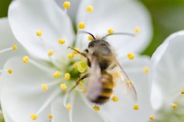 O pólen de abelha é um superalimento que tem a cor do ouro e dá à saúde uma vida 'dourada'. É considerado um dos superalimentos mais completos e um autêntico impulsionador do bem-estar. É rico em proteínas, aminoácidos, antioxidantes, vitaminas e ácido fólico. Fique a conhecer os principais benefícios do seu consumo - apenas uma colher de chá por dia -, eleitos pela plataforma 'Food Matters'.