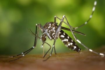 Ninguém gosta de aturar mosquitos. Embora a maioria das picadas sejam inofensivas, algumas podem transmitir doenças perigosas. Mas, no mínimo, são um grande incómodo. Veja como se prevenir com as dicas da Academia Americana de Dermatologia.