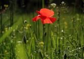 Chegou a primavera, a estação das flores. Bonitas, singelas, delicadas, cheias de vida e cor, cada uma delas possui um simbolismo associado. Conheça-os.
