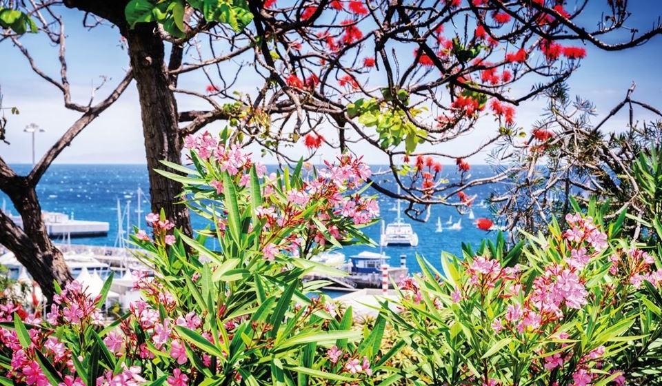 Madeira, Portugal - «A Madeira é certamente a ilha mais bonita da Europa com um clima ameno durante todo o ano e uma natureza intocada», refere o site. A Madeira é rica em história, cultura, gastronomia, tradição. A Madeira é o destino perfeito na Páscoa para caminhantes, amantes, aventureiros, aposentados ou casais jovens. É um destino 5 estrelas!