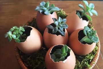 Os ovinhos também podem servir como vaso para um belo arranjo de flores naturais. Retire a gema e a clara, lave bem, pinte a gosto e coloque terra e as flores . Fonte : https://minhacasaminhacara.com.br/diy-de-pascoa/