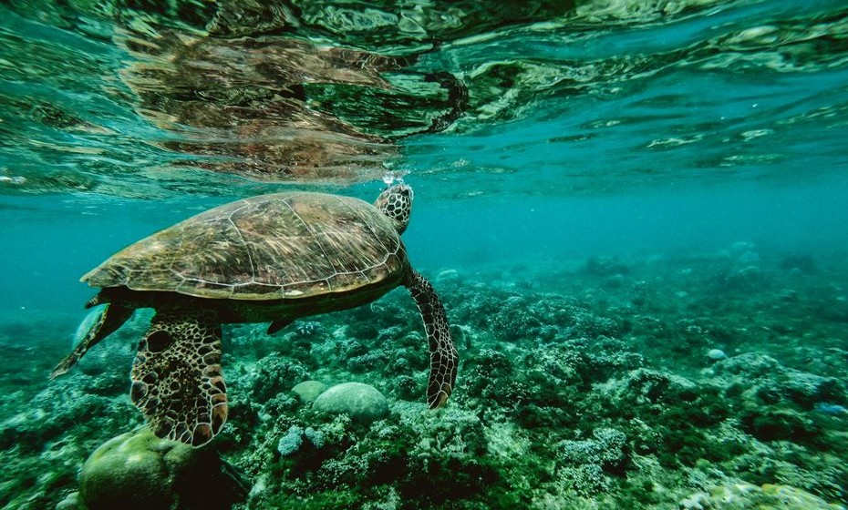 Conheça alguns factos, divulgados pela ONU, sobre os oceanos e o que representam para a vida na Terra.