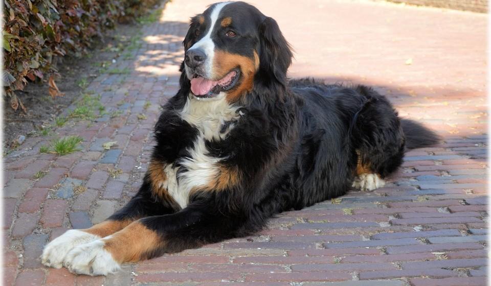 Treino e educação sempre que possível – O treino e a educação são importantes, em particular no caso dos cães. O seu médico veterinário pode aconselhá-lo sobre as melhores estratégias tendo em conta a raça e características do seu animal de estimação. (Fonte: Royal Canin)
