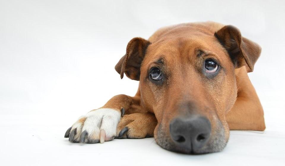 A saúde psicológica não deve ser ignorada – Cães e gatos podem sofrer de doenças psicológicas. A ansiedade de separação ou a depressão são duas doenças psicológicas que podem afetar os animais de companhia e que se refletem no seu comportamento e até mesmo na sua saúde física. O médico veterinário tem todas as competências para detetar os sinais clínicos e ajudar o seu amigo de quatro patas.