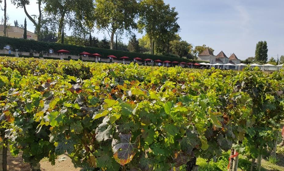 Pode também visitar vinhas e provar os vinhos da região.