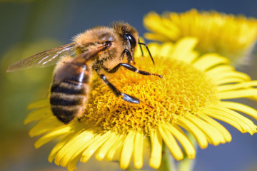 Como tratar uma picada de abelha