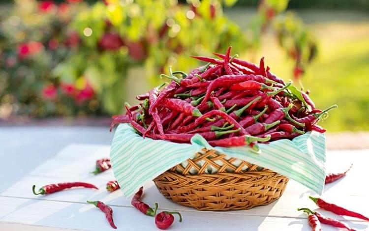 Pimenta na língua emagrece e trata doenças