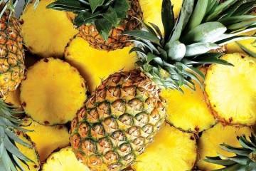 Curativo à base de abacaxi que facilita cicatrização desenvolvido no Brasil