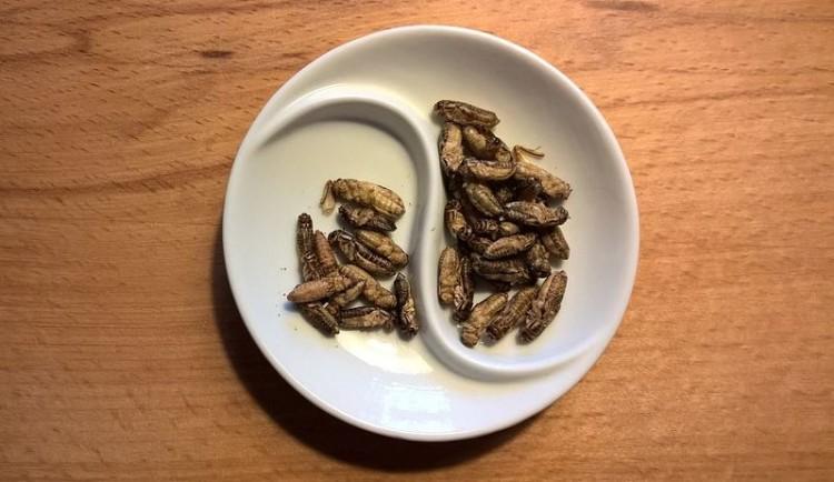 Comer grilos é bom para os intestinos