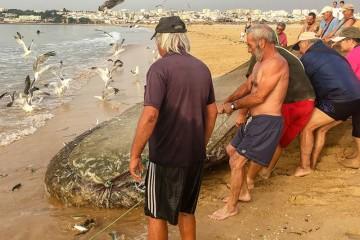 Arte Xávega, pesca por arrasto na Meia Praia em Lagos