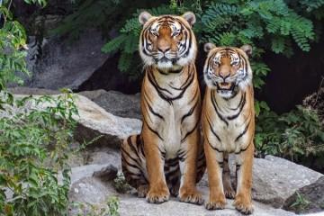 O amor chega (de noite) ao Jardim Zoológico no Dia dos Namorados