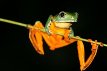 ONU: Um milhão de espécies em risco de extinção